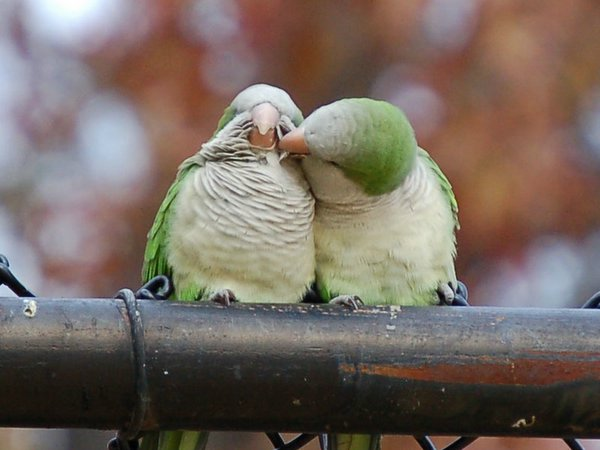 How Do Birds Mate - How Of Everything